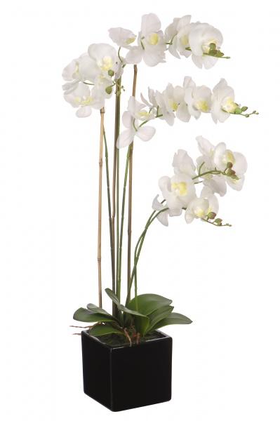 Покупка Орхидей Через Интернет Магазин Стоимость